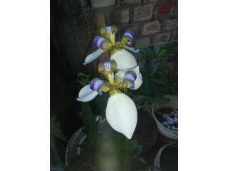 Descubra Como Ter Orquídeas Lindas, Saudáveis e Com Flores Dignas de Exposição Todos os Anos!