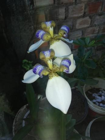 descubra-como-ter-orquideas-lindas-saudaveis-e-com-flores-dignas-de-exposicao-todos-os-anos-big-0