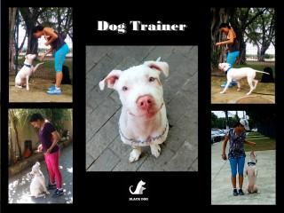 Adestrador - Adestramento de Cães