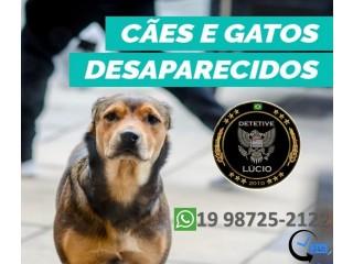Animais Desaparecidos e Perdidos/ Detetive Lucio