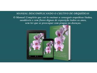 Descomplicando O Cultivo de Orquídeas